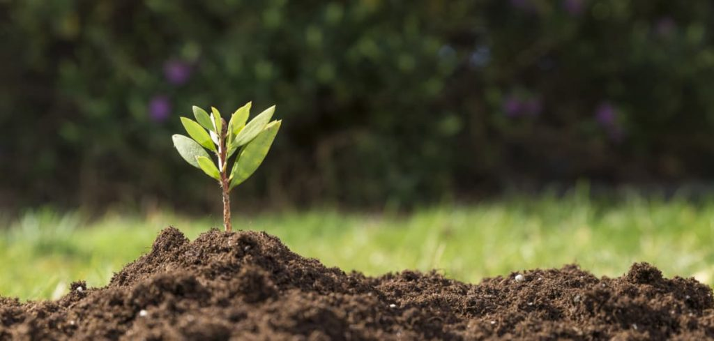 Uma pequena planta saindo da terra.