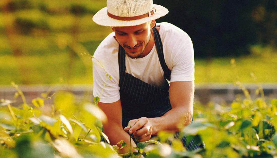 Agricultor cuidando da plantação