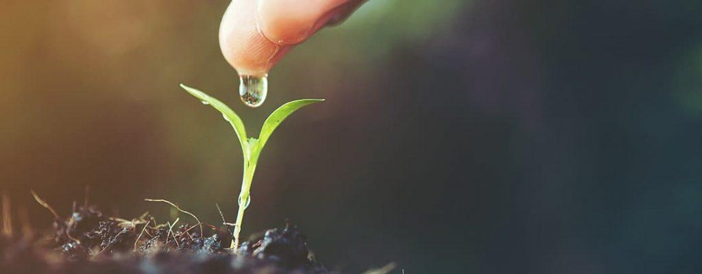 Foto de uma plantinha sendo irrigada. Desperdício de água pode casar prejuízos no agronegócio