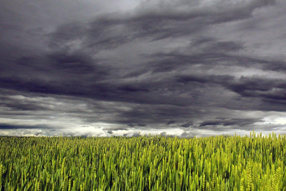 seguro agrícola e seguro rural